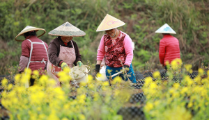 China's professional farmers rise to drive modernized agriculture