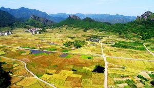 China's agriculture ready for a harvest year