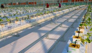 Chinese technology companies push for smart farming