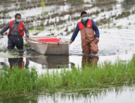 Crayfish industry in Hubei province ready to boom