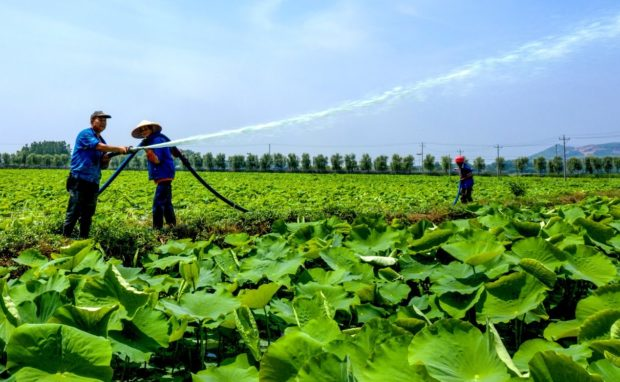 Lucid waters, lush mountains yield economic benefits in rural China