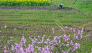 Hubei province ensures orderly farming activities