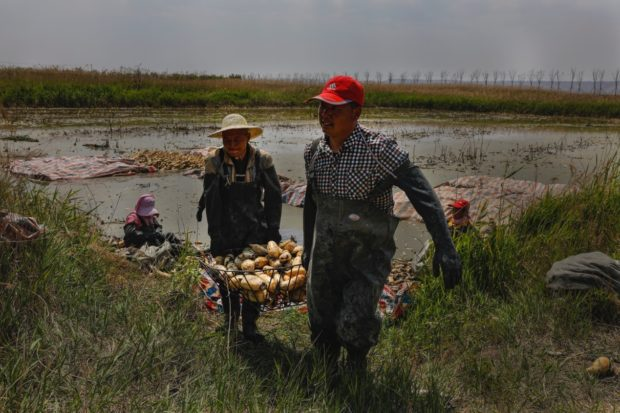 CPPCC member from Henan makes unremitted efforts to improve ecology of Yellow River