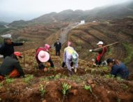 Chinese villages team up for poverty alleviation through tea planting