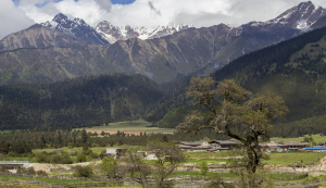 Forest coverage ratein Tibet rises to 12.14 percent