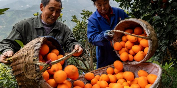Supply-side reform helps Chinese farmers locate target markets